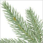 Stratford Spruce Tree by Balsam Hill Foliage