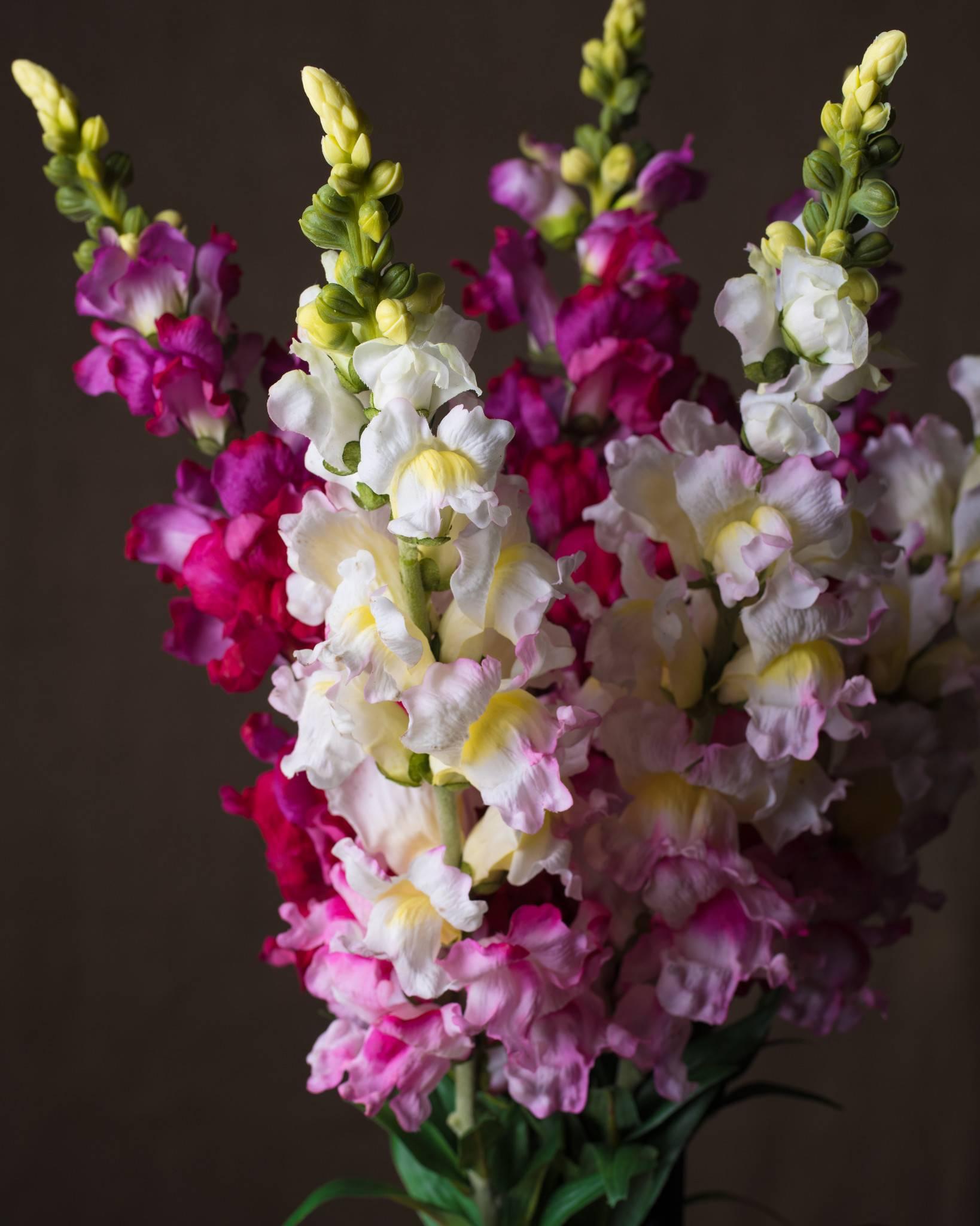 Snapdragon Flower Stems Balsam Hill