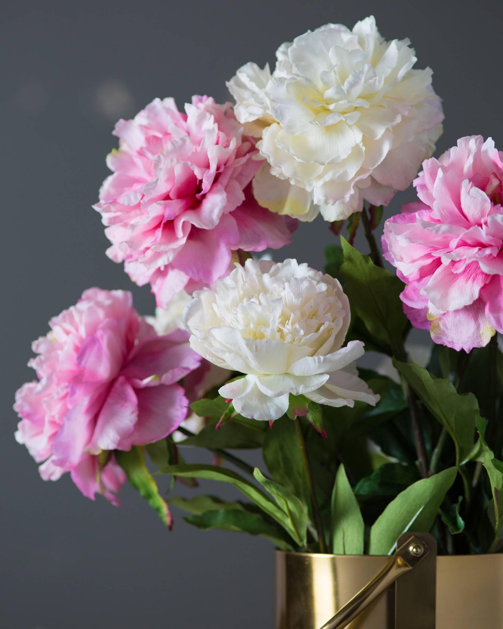Peony Flower Stems Main