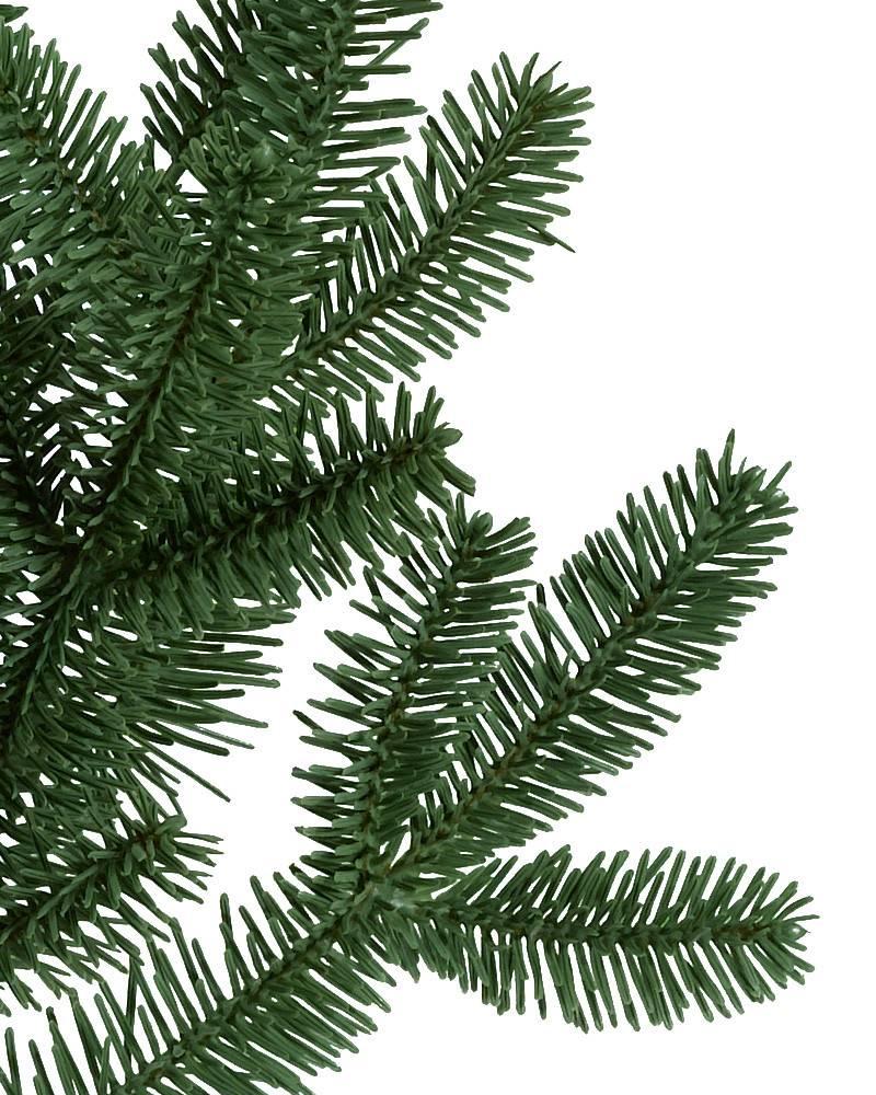 Bh Fraser Fir Tree 5