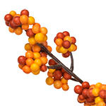 Fall Berry PDP Foliage