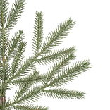 Brewer Spruce Tree by Balsam Hill Detail