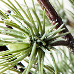 Frozen Pine Wreath by Balsam Hill Foliage