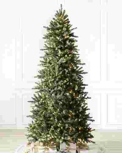 Berkshire Mountain Fir  Tree-1