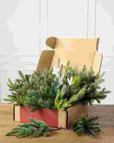 Branch Sample Kit by Balsam Hill