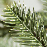 Sanibel Spruce Foliage