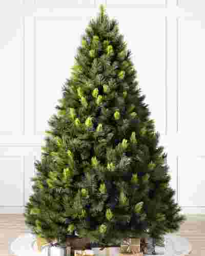 SCO-T Scotch Pine Tree by Balsam Hill SSC 40