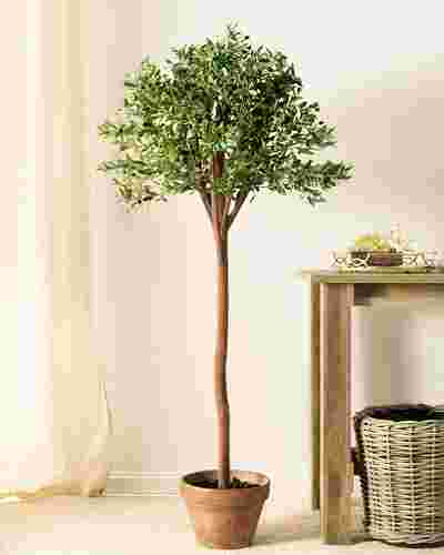 Olive Tree by Balsam Hill SSC 10
