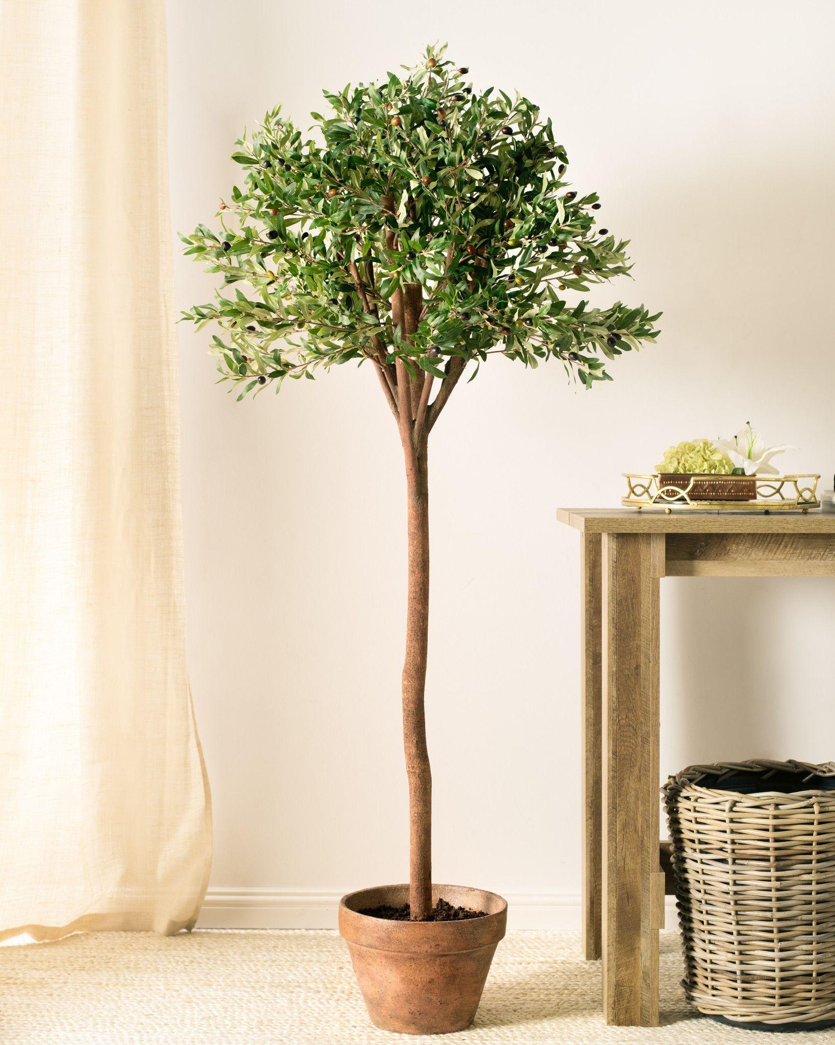 New Artificial Olive Tree | Balsam Hill XU19