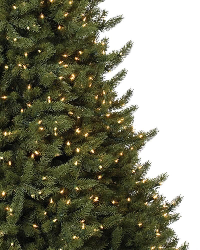 Vermont White Spruce Tree 4