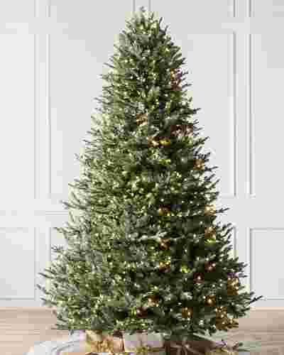BH Balsam Fir  Tree Main Image