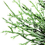 Beacon Hill Outdoor Cypress by Balsam Hill Foliage