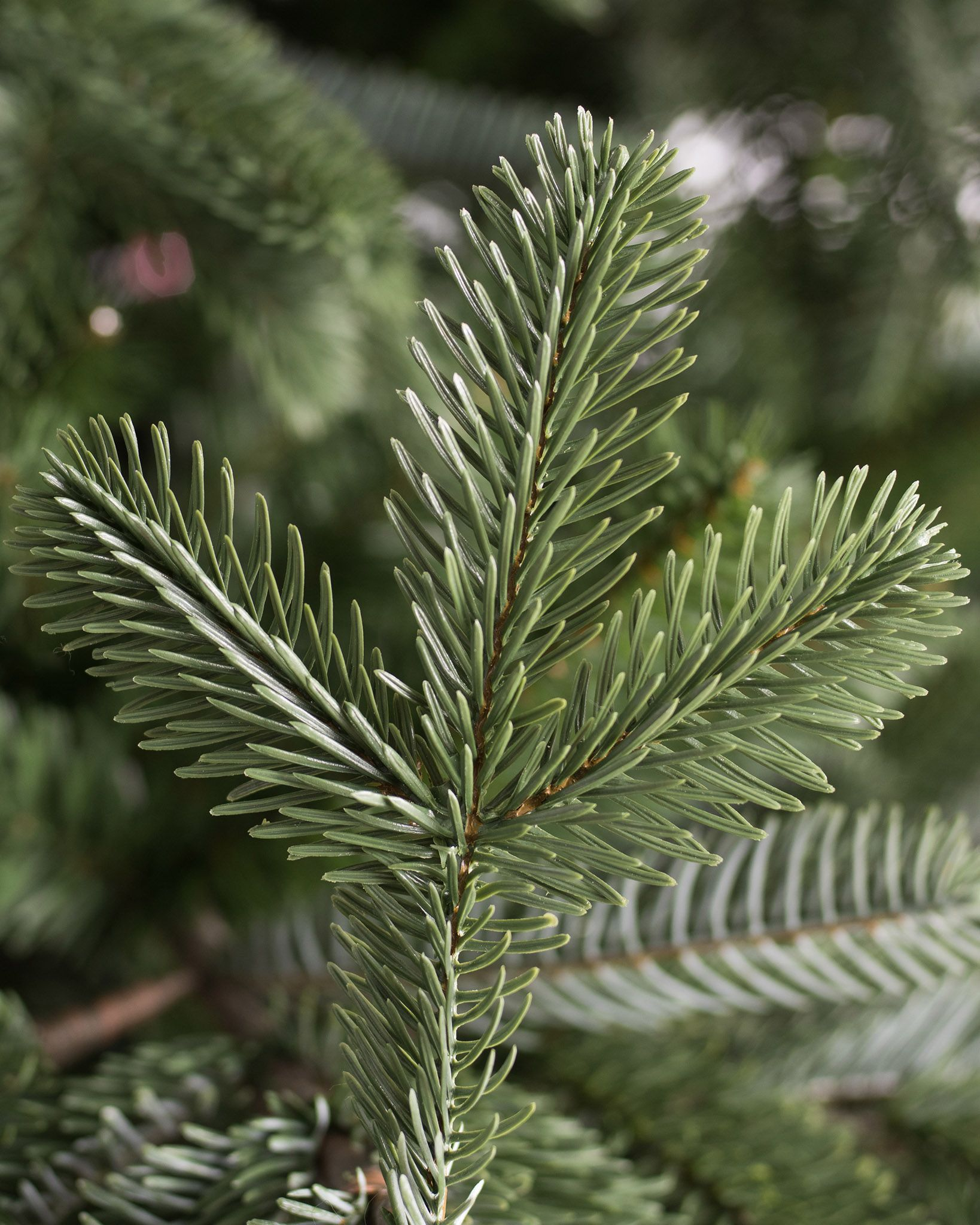 European Fir Artificial Christmas Tree