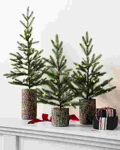 Evergreen Saplings Set of 3 by Balsam Hill SSC