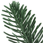 BH Noble Fir Narrow by Balsam Hill