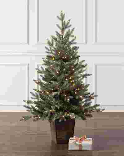 Potted Silver Spruce by Balsam Hill