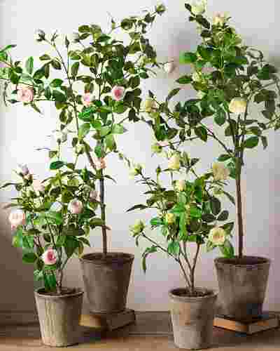 Surrey Rose Potted Plant by Balsam Hill Lifestyle 10