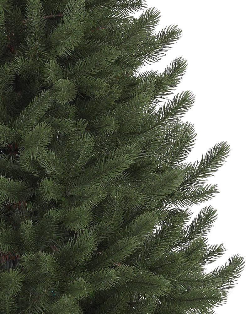Vermont White Spruce Tree 1