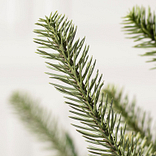 Potted Baby Sanibel Spruce by Balsam Hill Detail