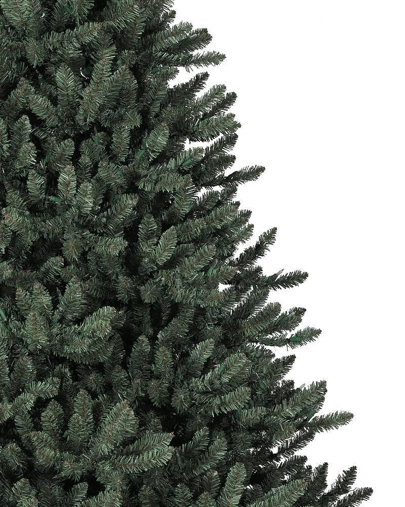 classic blue spruce tree 3