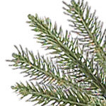 Brewer Spruce Tree PDP Foliage