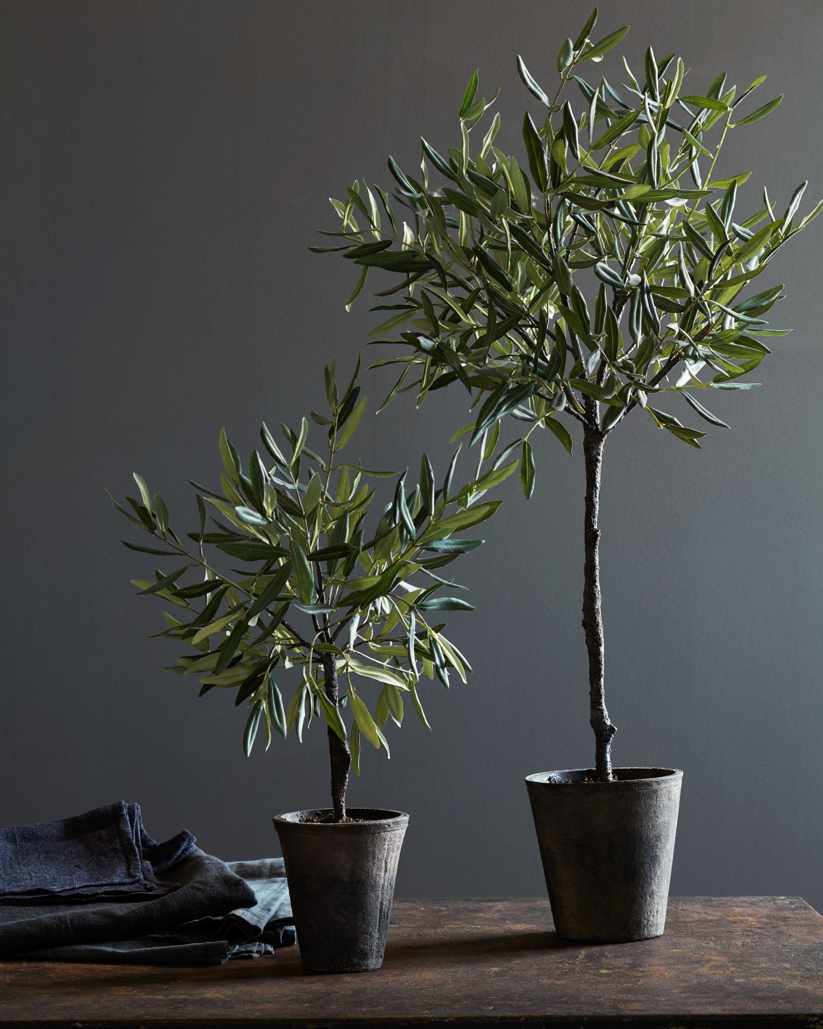 Best Campania Olive Topiary | Balsam Hill PZ51