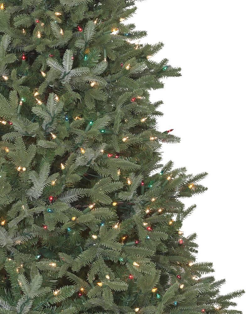 Bh Fraser Fir Tree 3