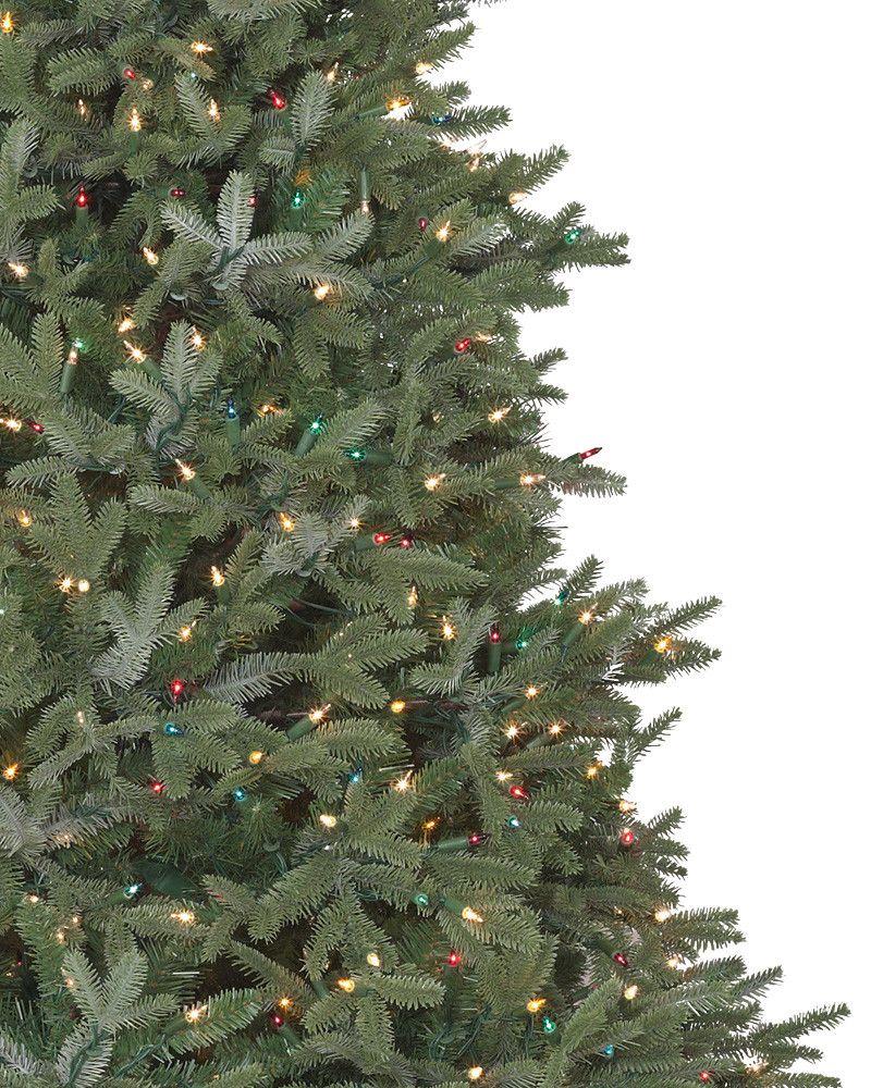 ... BH Fraser Fir Tree 3 ...