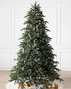 Bh Nordmann Fir Child 1 Tree