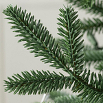 European Silver Fir PDP Foliage