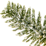 Frosted Fraser Fir Foliage Branch Detail