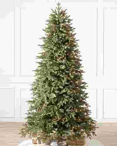 Stratford Spruce Tree-1