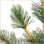 Frosted Sugar Pine Tree by Balsam Hill Foliage
