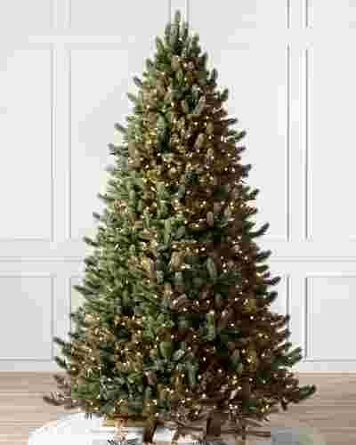 Vermont White Spruce  Tree-7