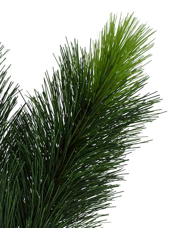 Scotch Pine Tree 6