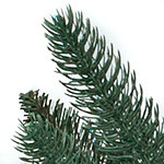 Oakville Outdoor Tree by Balsam Hill Foliage