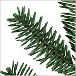 BH Fraser Fir  Tree PDP Foliage