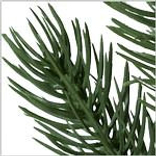 Vermont White Spruce Ultrabright by Balsam Hill Foliage