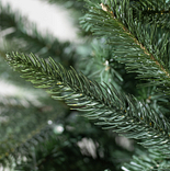 Mariana Spruce by Balsam Hill Detail