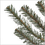 Potted Baby Spruce Tree PDP Foliage