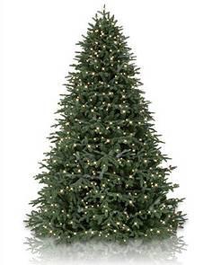 bh fraser fir main - Full Christmas Tree