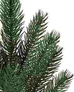 Vermont White Spruce Tree-1S