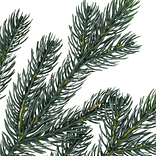 Norway Spruce Tree by Balsam Hill Detail