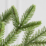 Alpine Christmas Tree PDP Foliage
