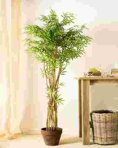 Zen Bamboo Tree by Balsam Hill SSC 10