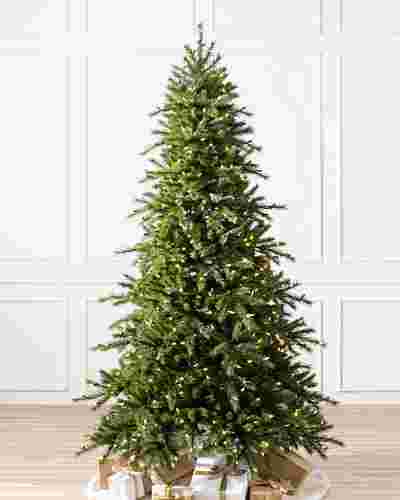 Norwegian Grand Fir Main