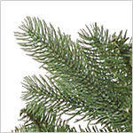 Bellevue Spruce PDP Foliage