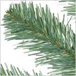 Aberdeen Spruce PDP Foliage