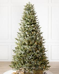 bh fraser fir narrow tree 1 - Christmas Trees Sale