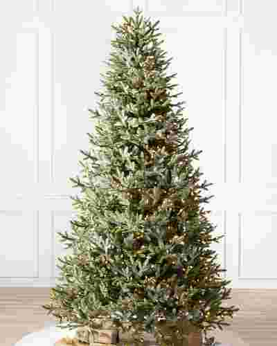 BH Fraser Fir  Narrow Tree-1
